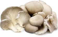 jamur tiram, oyster mushroom